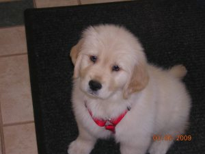 Jake as a puppy