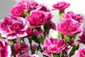 These pink carnations are a lovely way to celebrate 5 years in business!
