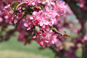 Azaleas and the Master's Golf Tournament: True Signs of Spring